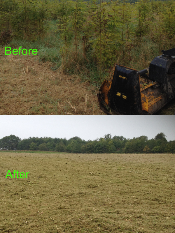 Image of before and after flailing