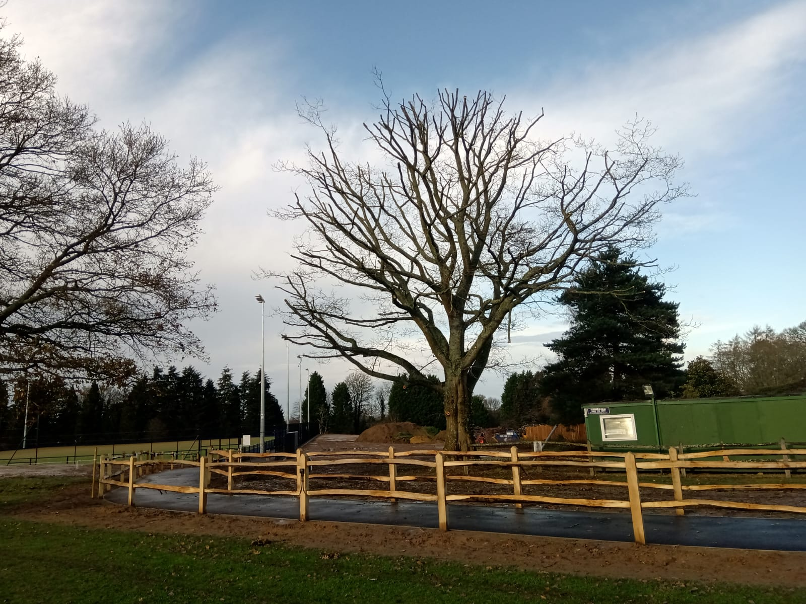 Tree Surrounded by Wooden Fencing