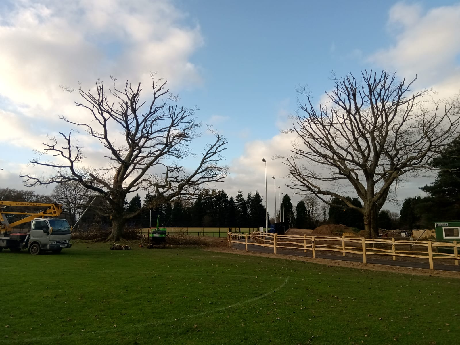 Trees Surrounded by Fencing