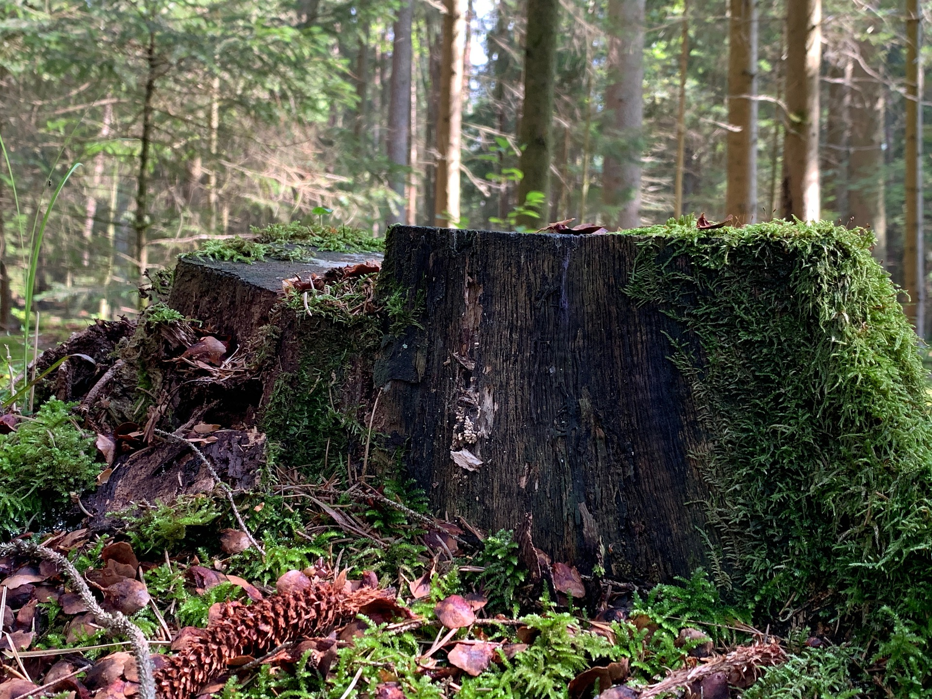 An image of a tree stump at SGL Forestry